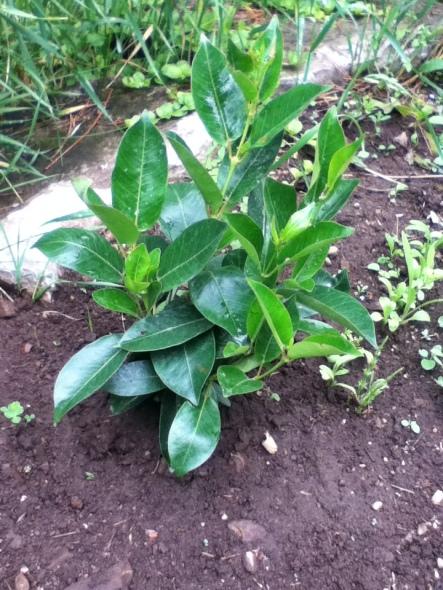 wisdom plant 001