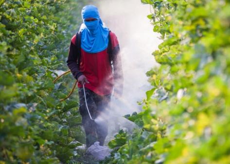 pesticides_spraying_2